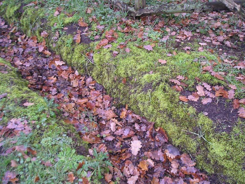 Biodiversità al Castellaccio. Tra muschi, erbe e licheni è nata una quercia...