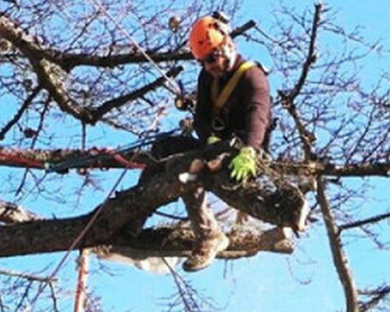 Faenza, campionati italiani di Treeclimbing