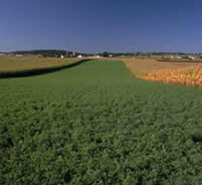 Contro il consumo di suolo