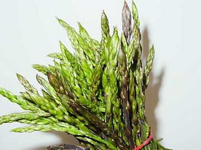 Abbinare l'asparago al vino