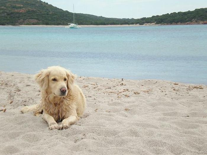 Cani in spiaggia, due aree a libero accesso