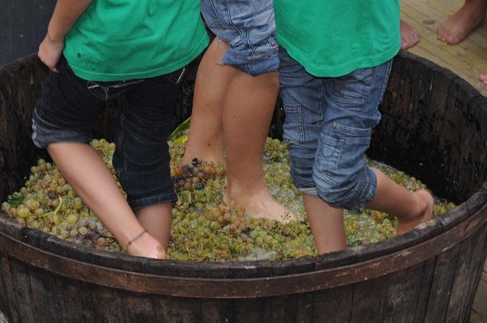 Sagra del vino tipico romagnolo