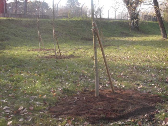 45 nuovi alberi grazie alla bolletta elettronica