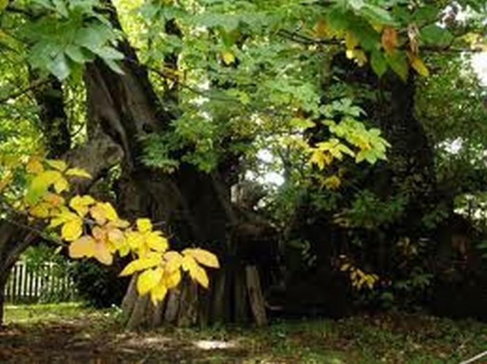 """""""Un albero per ogni nato"""", a dimora 121 piante"""