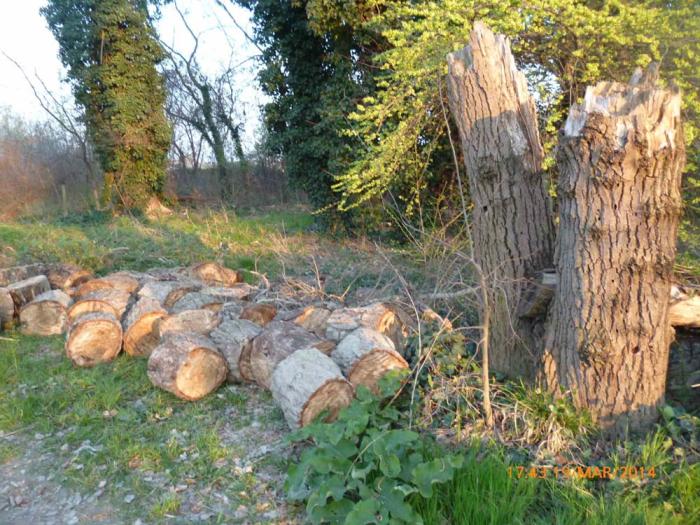 """""""Nessun albero abbattuto di recente nel Lungofiume"""""""