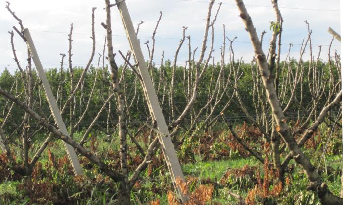 Agricoltura in ginocchio per clima e disciplinari