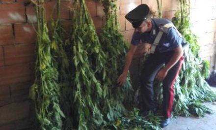 Coltivavano piante di marijuana, fermata una coppia di 40enni