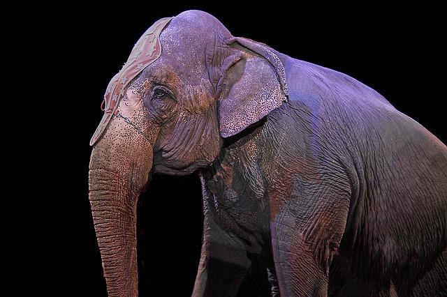 Potere al popolo contro il circo con animali