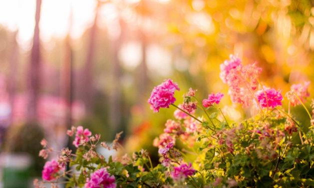 Giardinaggio: un hobby rilassante e raffinato per tutto l'anno