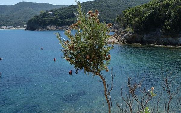 Elba, un'isola per tutti i gusti