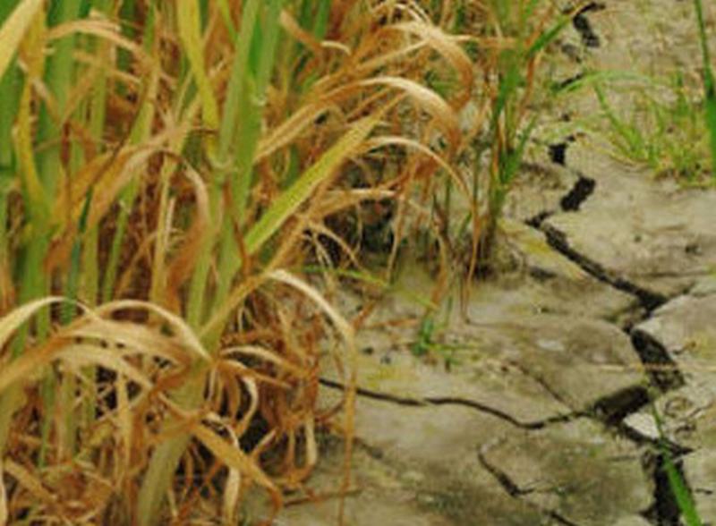 Un concorso per fotografare gli effetti della siccità