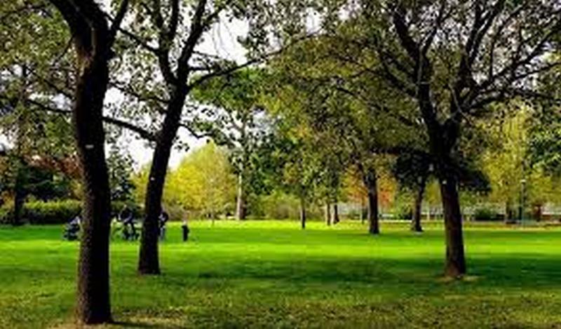 Ora prima di abbattere un albero Area Blu deve allegare un referto sulla salute