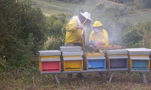 Corso per diventare apicoltori