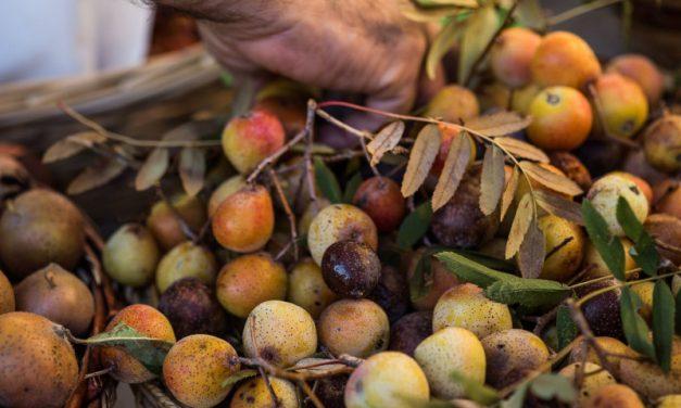 Frutti dimenticati e Marrone in festa a Casola Valsenio