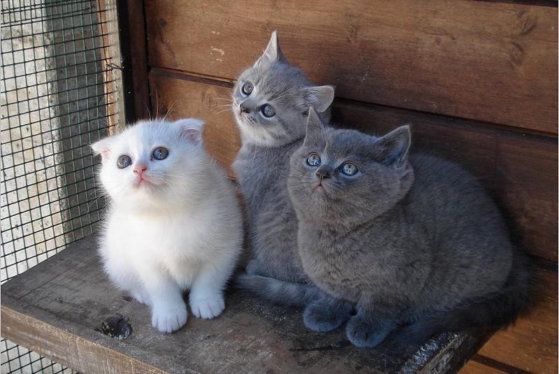 Allarme Per Il Gattile La Coop Potrebbe Non Partecipare Al Bando