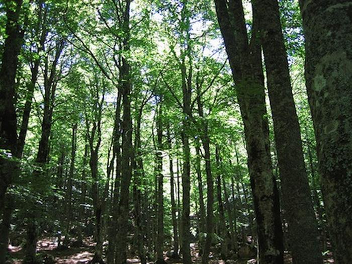 Cinque macro-aree per la gestione dei parchi della regione