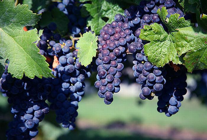 Vinitaly 2013 ed il vino Bio