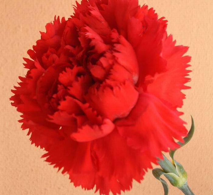 """DETTAGLI NELLA GRANDE STORIA: """"Il cuore antico del 1° maggio"""""""