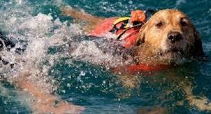 Cane quasi annegato in un fosso salvato dai carabinieri