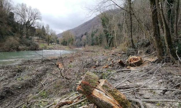 Taglio di alberi nel fiume Santerno, petizione alla Procura della Repubblica
