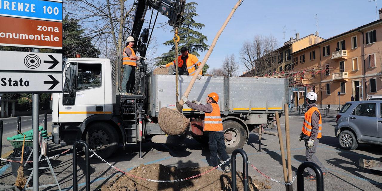Dopo il taglio, nuovi alberi messi a dimora in piazzale Ragazzi del '99