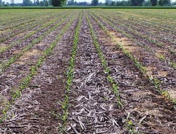 A lezione di agricoltura: glifosato sì e glifosato no