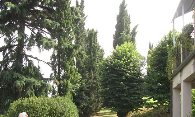 """""""Naturalmente Imola"""", visita a giardini e cortili con musica e cibo"""