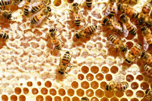 """Cia Imola: """"Il clima ha alterato il ciclo produttivo del miele, è emergenza"""""""