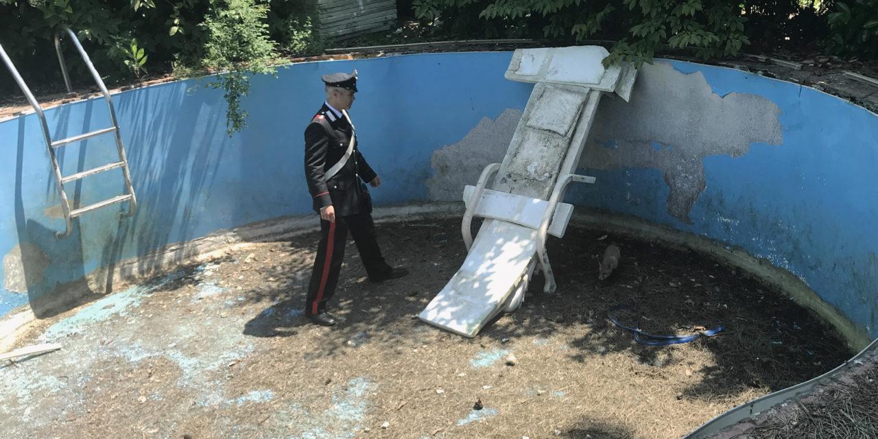 Volpe intrappolata in una piscina salvata dai carabinieri