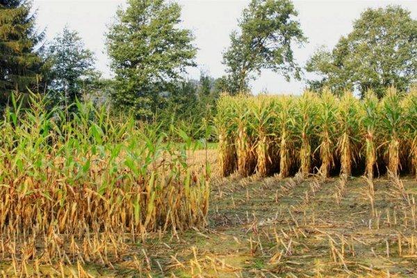 Pesticidi, alimentazione e salute, incontro a Primola