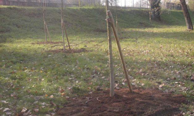 Cambiamenti climatici? Piantiamo alberi ovunque