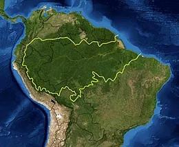 Perché il Brasile brucia?