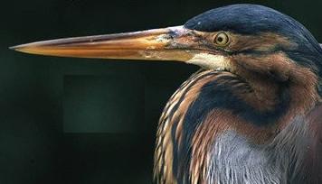 """Dalla regione: """"Taccuino ornitologico della costa romagnola. Diario di un viaggio durato cinquant'anni"""""""