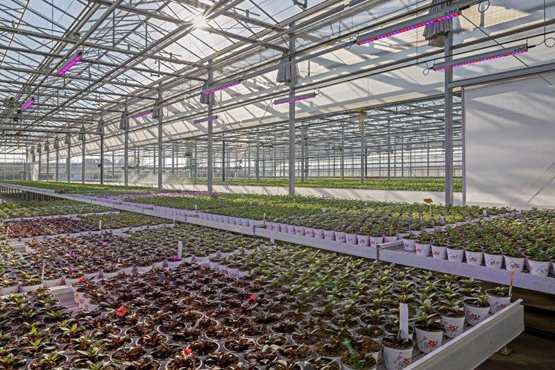 Iluminazione a led e radiazioni UV per l'agricoltura del futuro