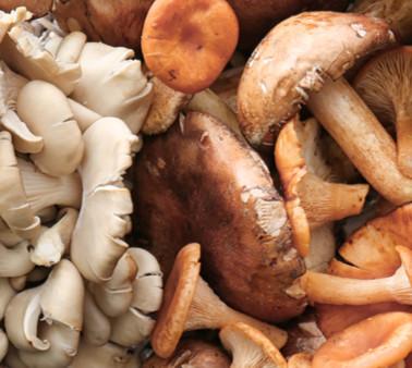 Arrivano i funghi, riapre l'Ispettorato micologico
