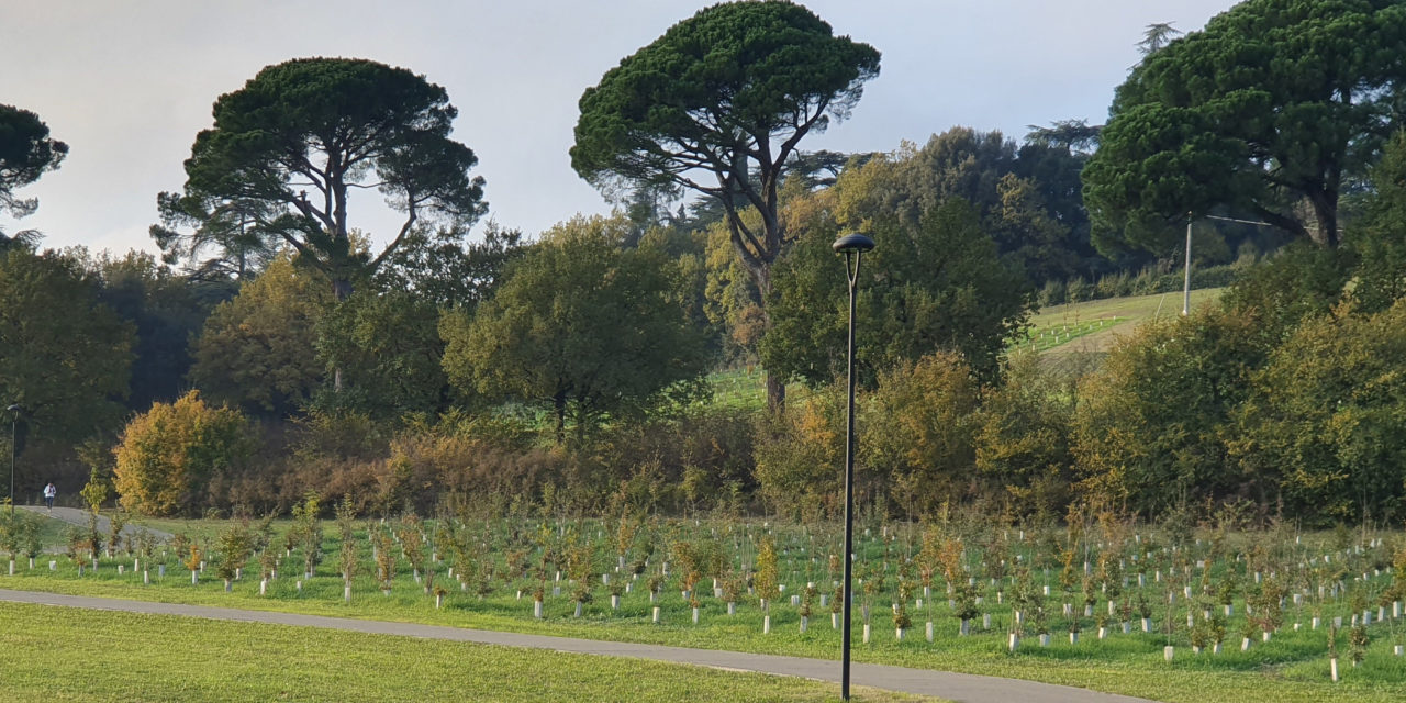Area Blu invitata a Venezia per raccontare l'impianto di 5000 alberi a Imola