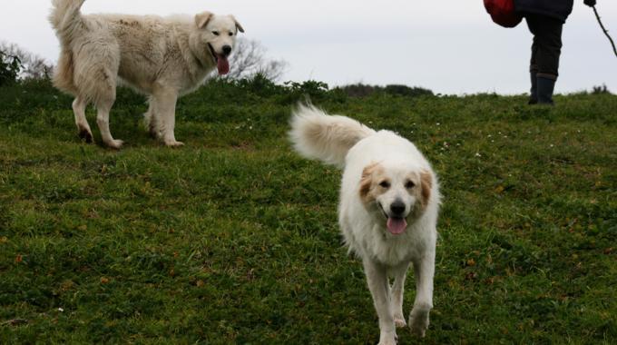 Cinque nuove aree sgambatura per i cani e riqualificazione di 11 esistenti