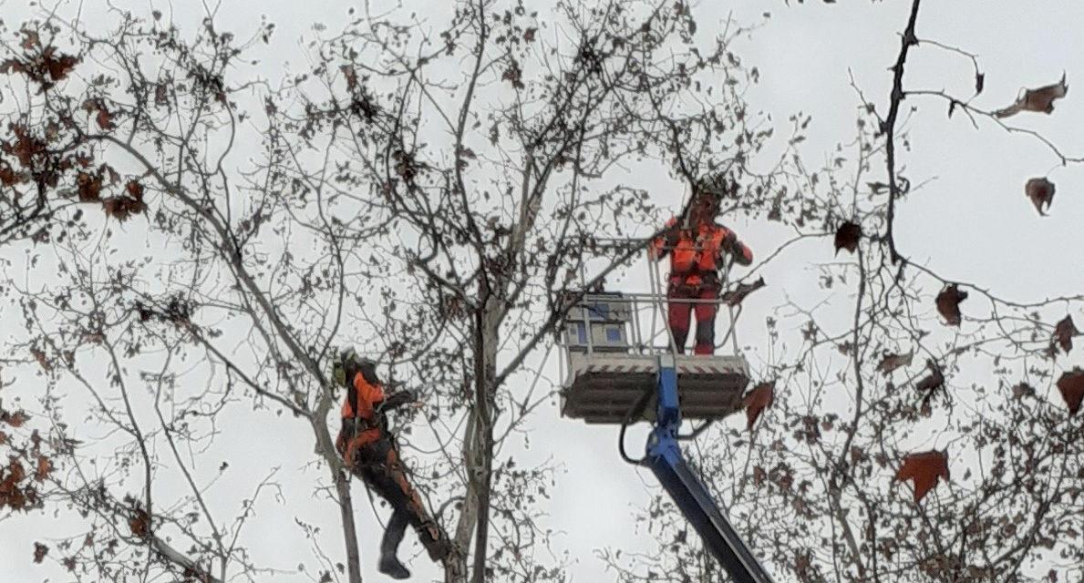 Al via a Castello potature di alberi in diverse vie con un approccio qualitativo