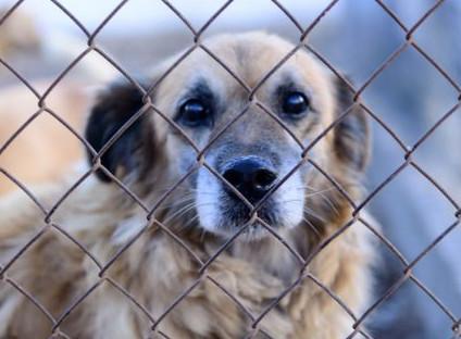 Un nuovo rifugio del cane nascerà a Faenza