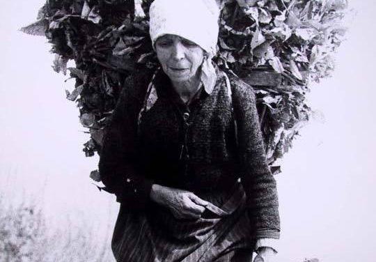 """C'ERA UNA VOLTA: """"Il prezioso raccolto delle foglie, organo dai mille usi"""""""