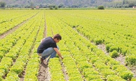 Agricoltori senza reddito? Così si uccide il comparto