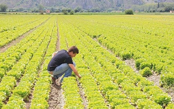 Giovani in agricoltura, malgrado tutto…