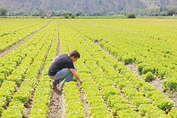 Europa e agricoltura, serve più ambizione