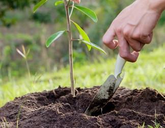 Faenza, 231 nuovi alberi piantati all'ingresso dell'autostrada