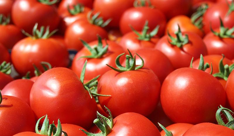 Cia e Confagricoltura Ferrara: il prezzo del pomodoro non va bene