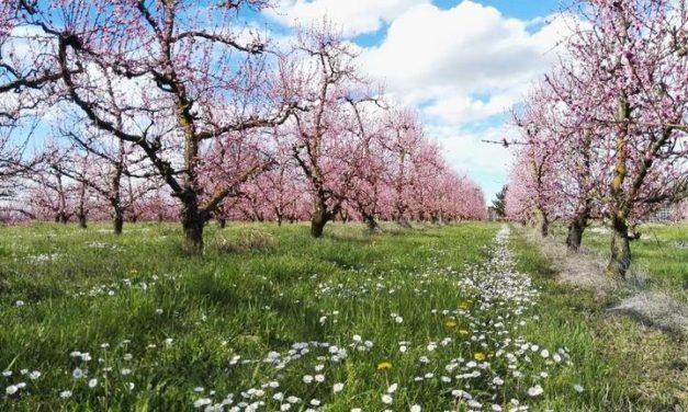 """C'ERA UNA VOLTA: """"L'arrivo della primavera, con la semina e il bucato al fiume"""""""