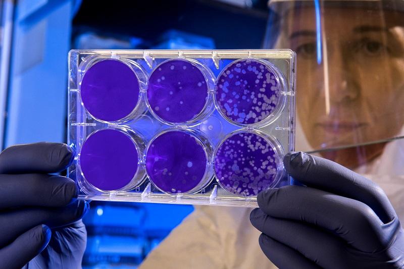 Coronavirus, 544 i casi positivi riscontrati in Emilia-Romagna Bologna
