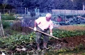 Ripartono la coltivazione negli orti comunali e la vendita di piante e fiori