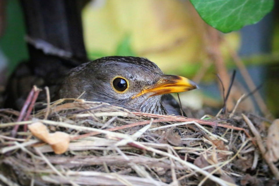 """#ioracconto: """"La poesia di un nido"""""""