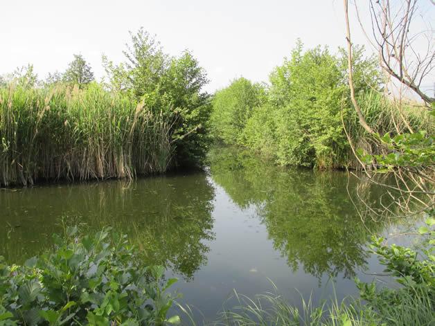 C'ERA UNA VOLTA: Gli stagni di campagna, oasi di fauna a rischio estinzione